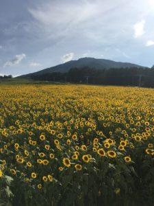 【高山からのお便り】高山の夏の景色